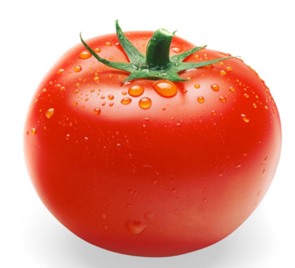 Bệnh thường gặp trên cây cà chua