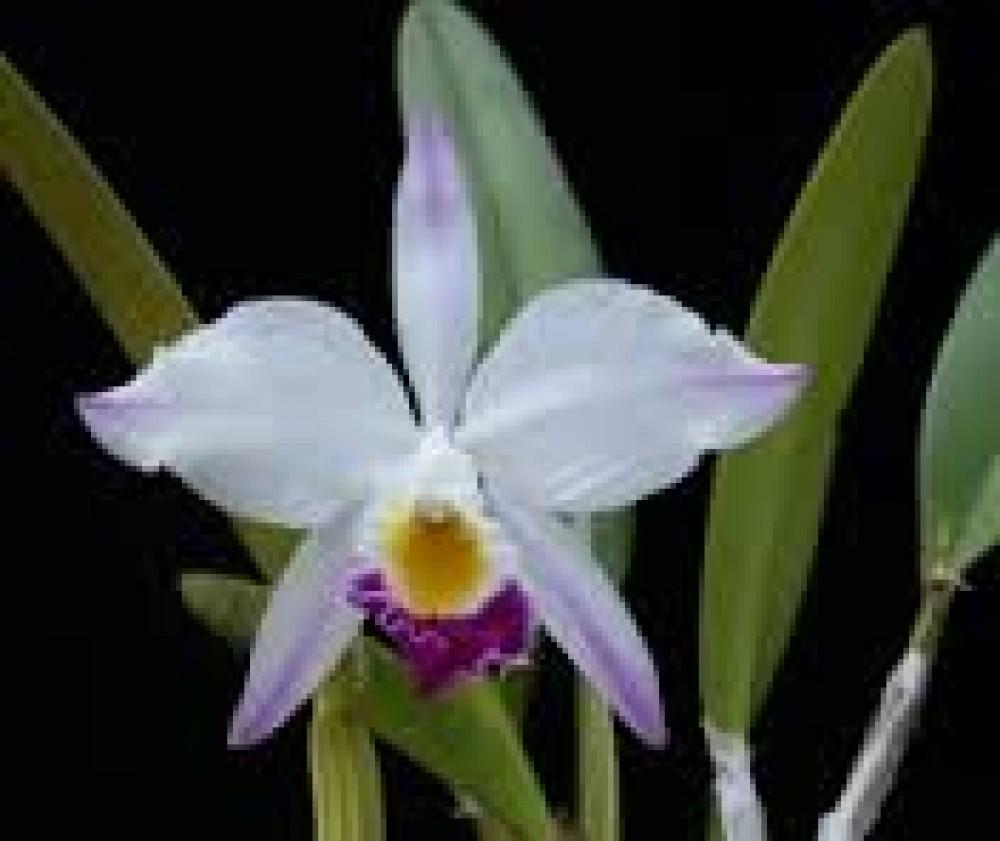 Bệnh thường gặp trên cây hoa lan