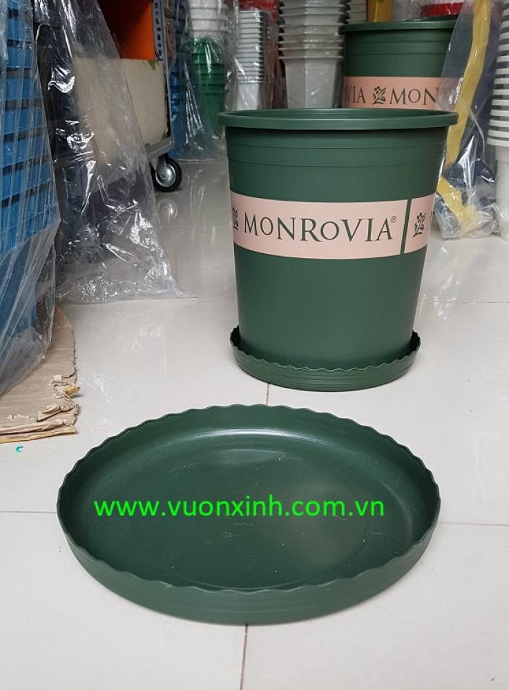 Đĩa chậu Monrovia size 5
