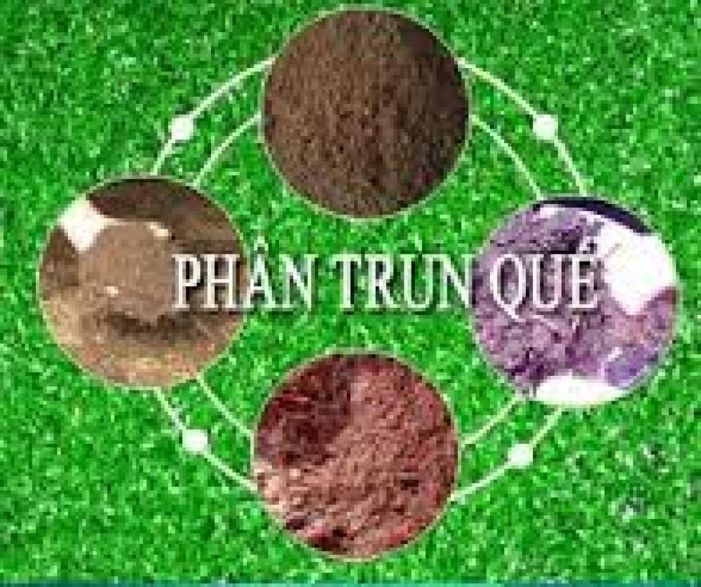Dùng phân trùn quế sao cho hiệu quả với cây trồng